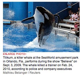killer whale Tilikum