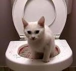 CAT - in the toilet